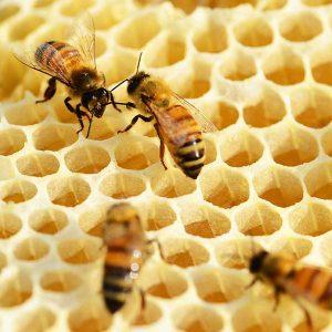 Echipamente și utilaje pentru apicultură